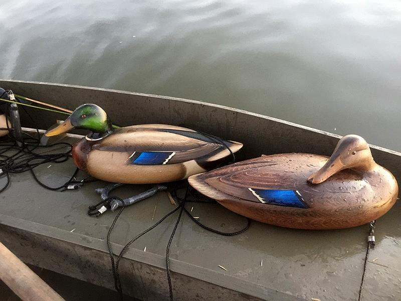 Sutton Conn mallards